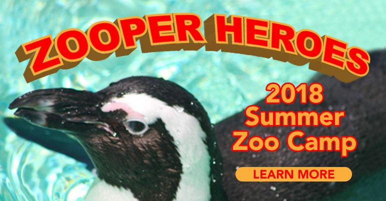 zooper-hero-camp