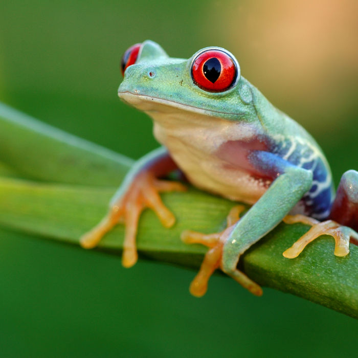 frog watch usa